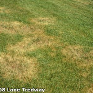 insect damage to lawn