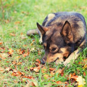 dog on fallen leaves on lawn