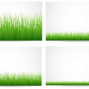 growing grassline graphic image