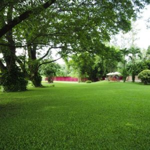 Benefits of Fertilizing Trees & Shrubs
