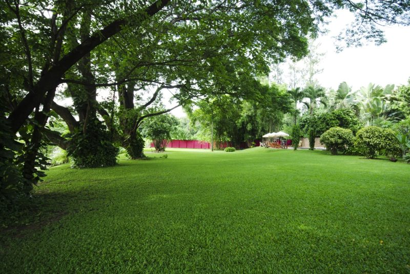 Clean green lawn free of pests