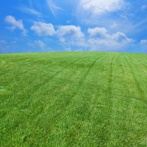 Professional lawn care in Middle Tennessee