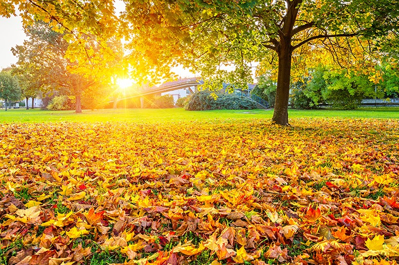 How To Get Your Lawn Ready For Fall Securelawn