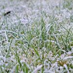 How to Care for the Lawn in Winter