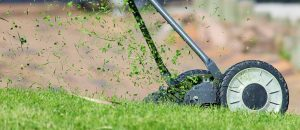 Eliminate Billbugs from Your Lawn
