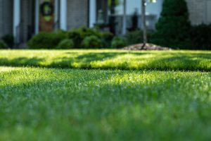 Selecting the Right Grass for Your Region
