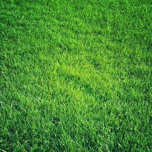 Essential Nutrients for a Healthy Lawn
