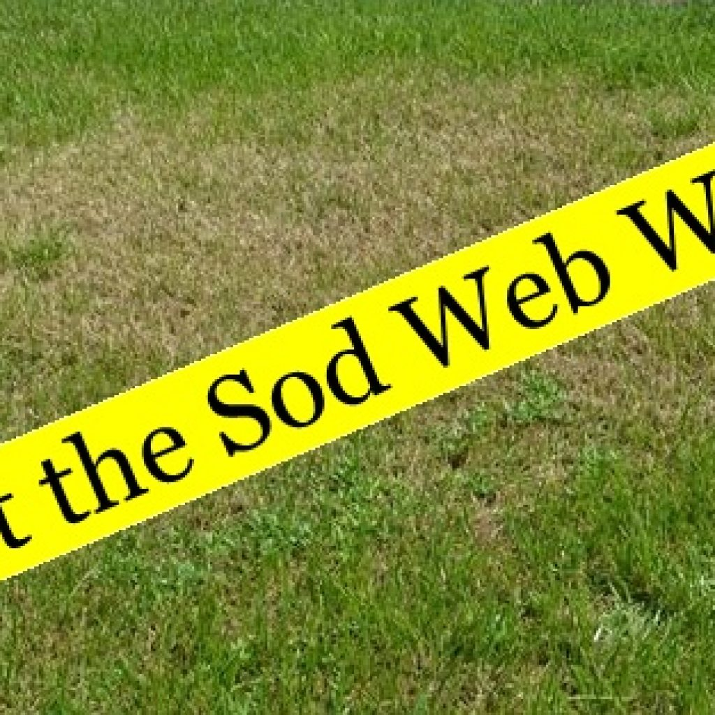 About The Sod Web Worms Securelawn Murfreesboro Tennessee