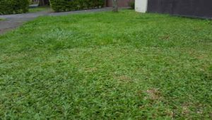 Managing Heat Stress on Lawns
