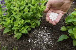 Why Add Lime to Soil