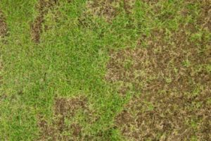 heat stress on your lawn