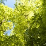 Trees That Will Ruin Your Yard