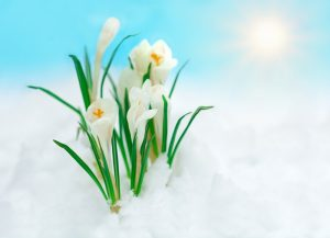 How Can You Reduce Rock Salt's Impact on Your Lawn
