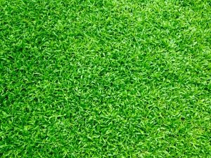 Achieving green grass is easier than you think.