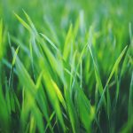 With proper care and maintenance you will have healthy grass all year long.